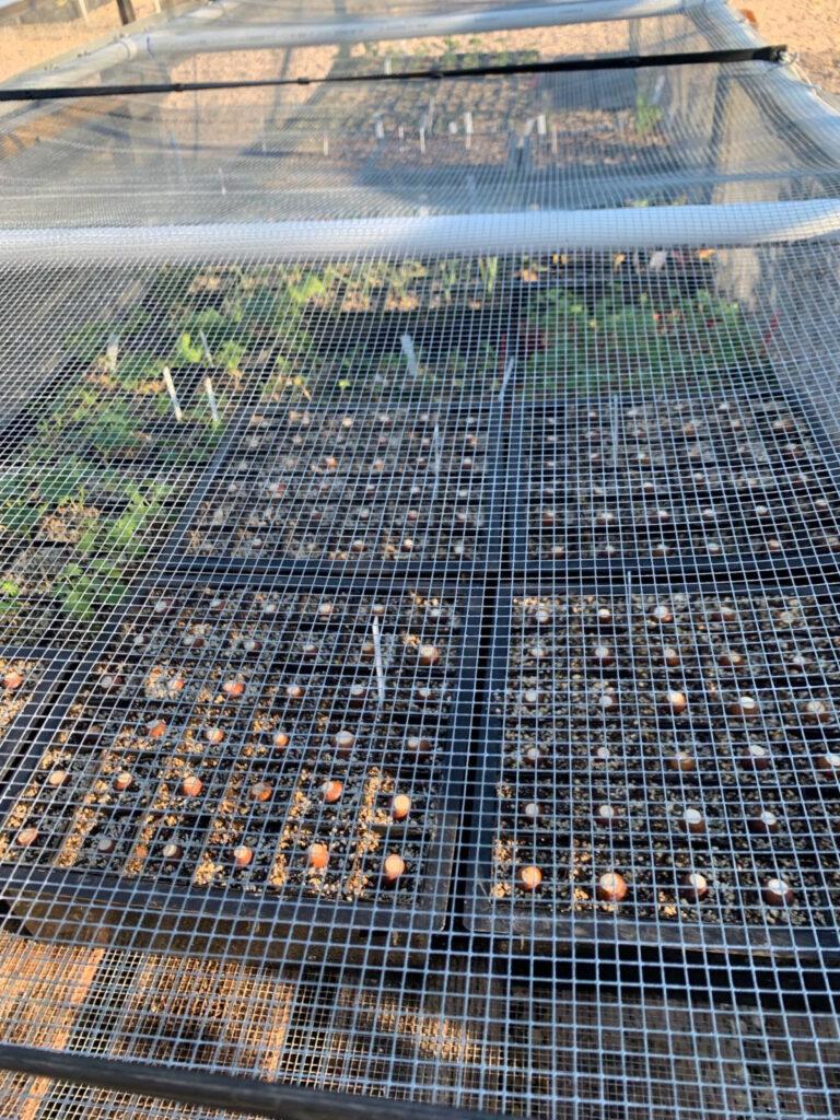 growing works oaks project