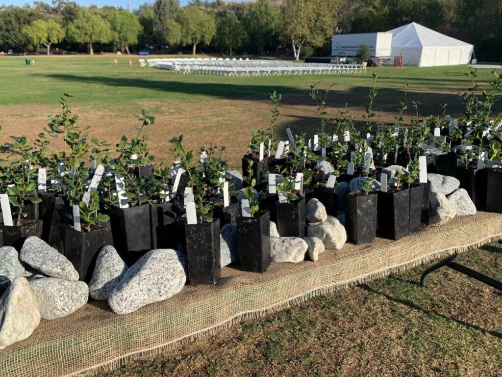growing works oak project