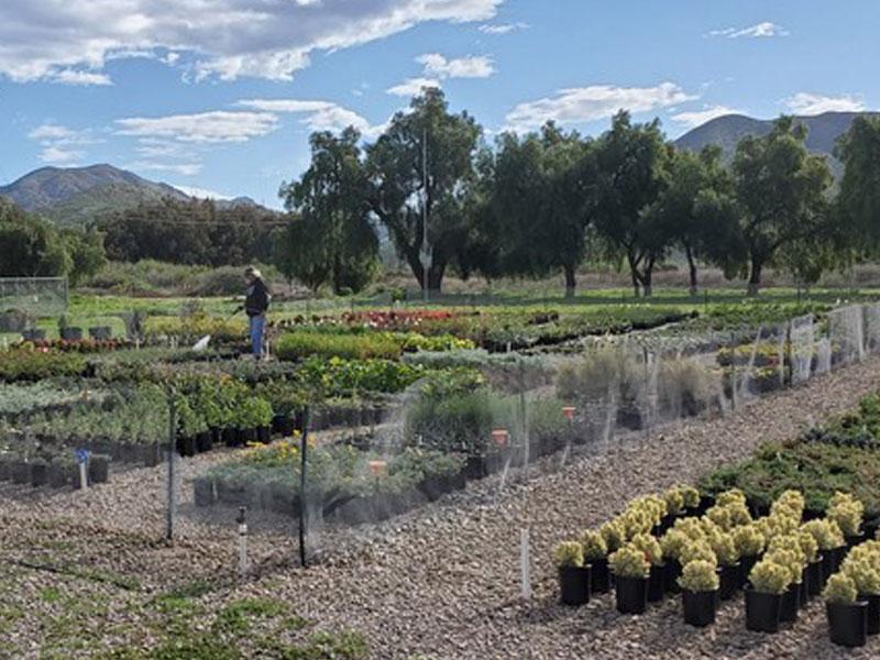 Growing Works Camarillo CA